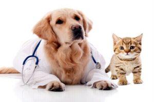 Pet Insurance Naperville