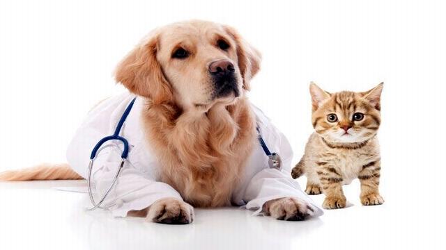 pet-insurance-naperville